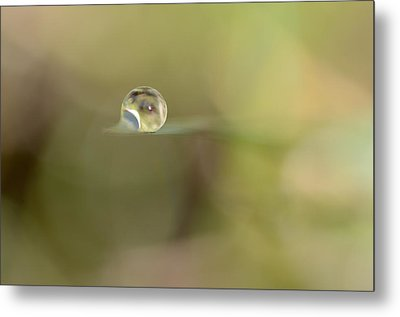 A Drop Of Subtlety Metal Print by Janet Dagenais Rockburn