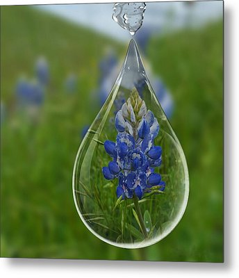A Drop Of Texas Blue Metal Print by ARTography by Pamela Smale Williams