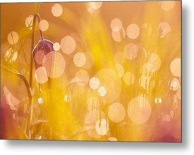 A Fairies Place IIi - Chess Flower Metal Print by Roeselien Raimond