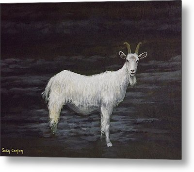 A Feral Goat On The Burren Metal Print by Sean Conlon