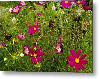 A Field Of Wild Flowers Growing Metal Print by Todd Gipstein
