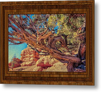 A Fighter Tree Metal Print by John M Bailey