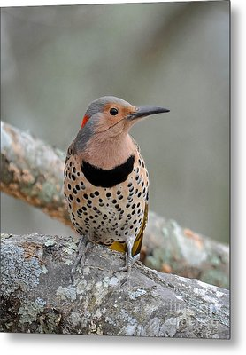 A Flicker Of Sunshine In Winter Metal Print by Amy Porter