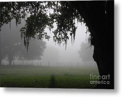 A Foggy Day In Rural Fl Metal Print