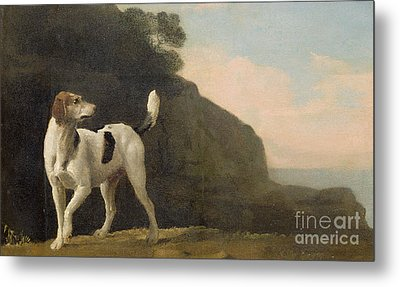 A Foxhound Metal Print by George Stubbs
