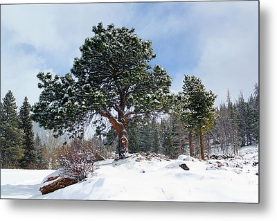 Metal Print featuring the photograph A Fresh Blanket Of Snow by Shane Bechler