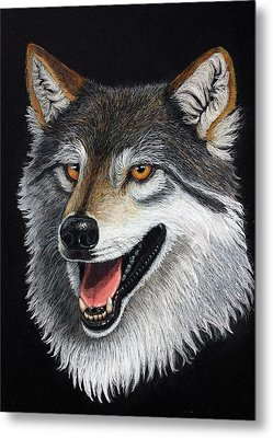 A Friendly Wolf Metal Print by Lorraine Foster