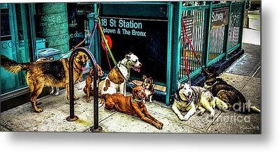 A Gang Of Dogs In Nyc Metal Print
