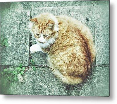 A Ginger Cat Metal Print
