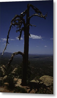 A Gnarled Tree In Arizona Metal Print by Stacy Gold