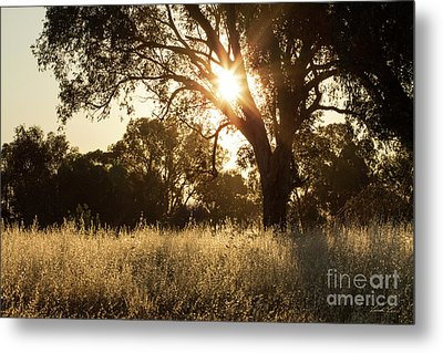 Metal Print featuring the photograph A Golden Afternoon by Linda Lees