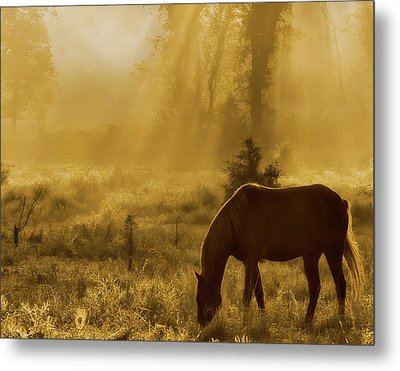 A Golden Moment Metal Print by Ron  McGinnis