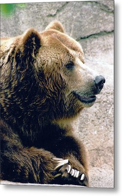 A Grizzly Grin Metal Print