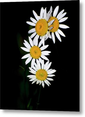 Metal Print featuring the digital art A Group Of Wild Daisies by Chris Flees
