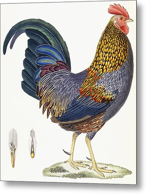 A Hen Metal Print by French School