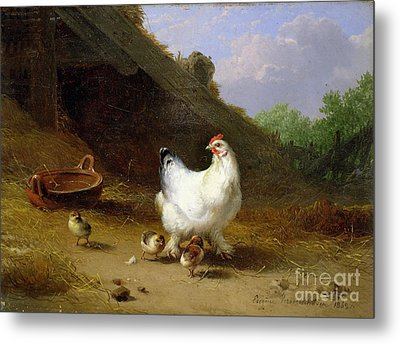 A Hen With Her Chicks Metal Print