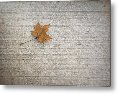 A Hint Of Autumn Metal Print by Scott Norris