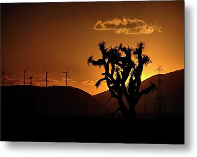 Metal Print featuring the photograph A Holy Joshua Tree by Peter Thoeny