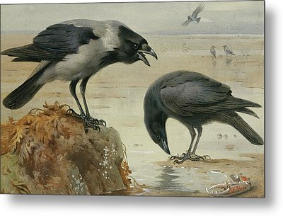 A Hooded Crow And A Carrion Crow Metal Print