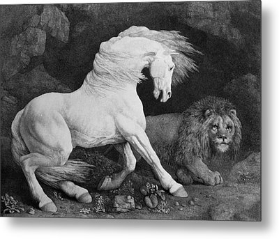 A Horse Affrighted By A Lion Metal Print by George Stubbs