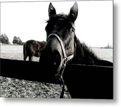 A Horse In The Country Metal Print