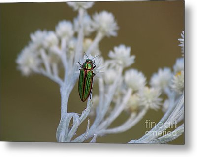 A Jewel Metal Print by Tracey Levine