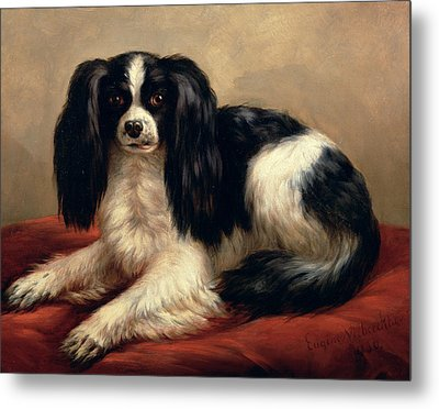 A King Charles Spaniel Seated On A Red Cushion Metal Print by Eugene Joseph Verboeckhoven