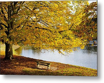 A Large Tree And Bench Along The Water Metal Print by John Short