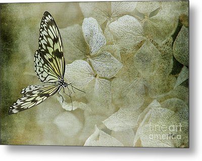 A Lighter Touch Metal Print by Lois Bryan