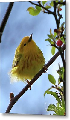 A Liitle Yellow Puff Ball Metal Print by Marle Nopardi