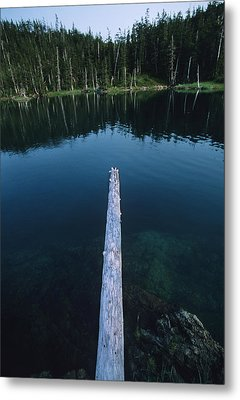 A Log Juts Out Over A Lake Metal Print by Bill Hatcher