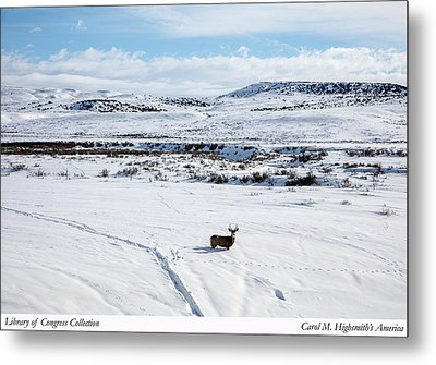 A Lone Buck Deer In Carbon County, Wyoming Metal Print by Carol M Highsmith