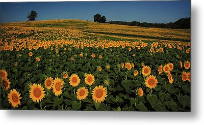 Metal Print featuring the photograph A Lot Of Birdseed  by Chris Berry
