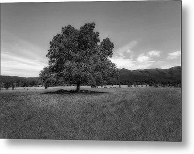 A Majestic White Oak Tree In Cades Cove - 2 Metal Print by Frank J Benz