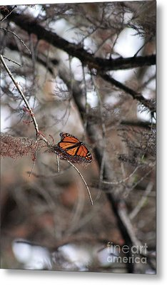 A Monarch For Granny Metal Print