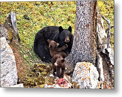 A Mountain Goat Feast Metal Print by Adam Jewell