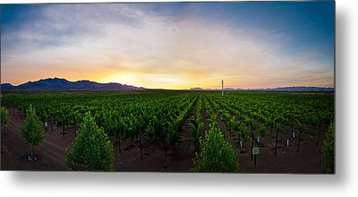 A New Day In The Field Metal Print