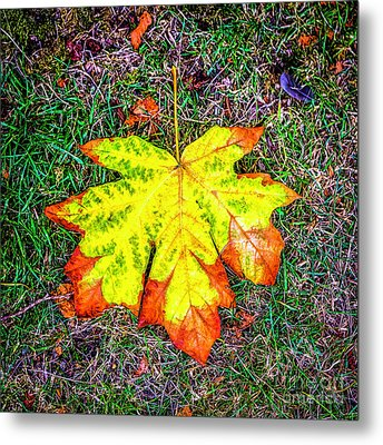 A New Leaf Metal Print by Jon Burch Photography