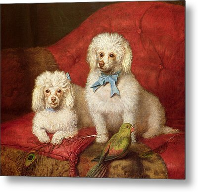 A Pair Of Poodles Metal Print by English School