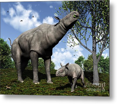 A Paraceratherium Mother Grazes Metal Print by Walter Myers