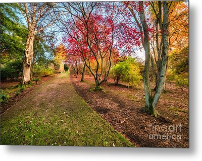 A Path Into Autumn Metal Print by Adrian Evans