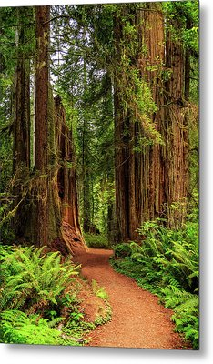 Metal Print featuring the photograph A Path Through The Redwoods by James Eddy