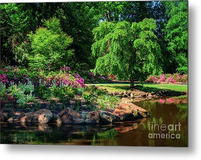 A Peaceful Feeling At The Azalea Pond Metal Print by Tamyra Ayles