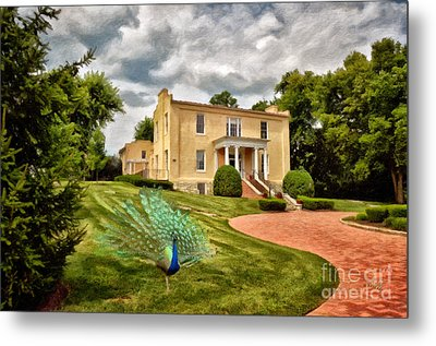 A Peacock At Beallair Metal Print