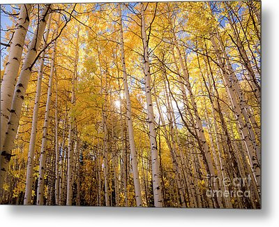 Metal Print featuring the photograph A Perfect Day Begins by The Forests Edge Photography - Diane Sandoval