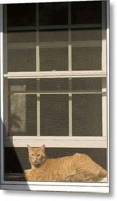A Pet Cat Resting In A Screened Window Metal Print by Charles Kogod