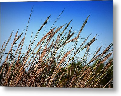 A Picture Worth A Thousand Words Metal Print by Debra Forand
