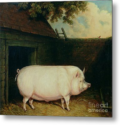 A Pig In Its Sty Metal Print by E M Fox