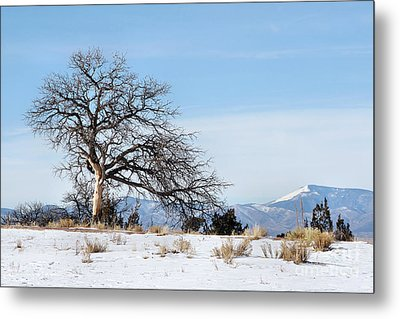 A Placid Winter Scene Metal Print