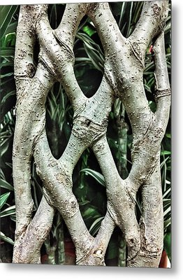 A Plant Trunk Metal Print by Tom Gowanlock